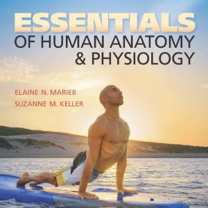 Test Bank for Essentials of Human Anatomy & Physiology, 12th Edition